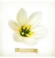 White flower vector image