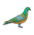 drawing stylized dove pigeon freehand sketch vector image