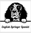 english springer spaniel - peeking dogs - - breed vector image
