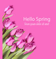 pink tulips card watercolor helo spring vector image vector image