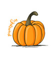 appetizing sketch pumpkin vector image