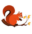 cartoon squirrel character vector image