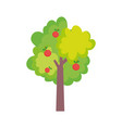 fruits tree apples harvest farm icon vector image