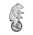 unicycle bear sketch vector image