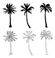 Palm tree silhouette icons on white background