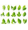 green leaf and leaves abstract icons set vector image