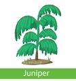 Juniper cartoon icon vector image