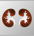 the brown silhouette of the kidney is carved on vector image vector image