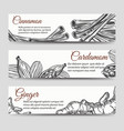 cookery banners template with spices vector image