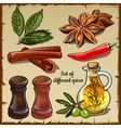 Set of different spices of the chef and foodie vector image