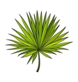 Fan shaped leaf of palmetto tree sketch style vector image vector image