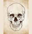 line art human skull grunge background vector image vector image