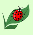 cute ladybug on green leaf isolated onlight green vector image vector image