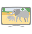 plasma broad tv-set elephants on screen vector image