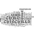 what to do when your child wants a chinchilla vector image vector image