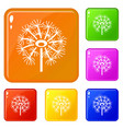 dry dandelion icons set color vector image vector image