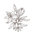hand drawn lily bouquet vector image vector image