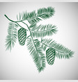 hand drawn pine tree branch vector image vector image