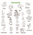 best herbs for cardio tonic vector image vector image