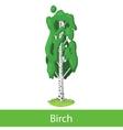 Birch cartoon tree vector image vector image