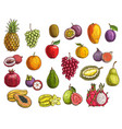 fruit and berry sketches exotic and garden food vector image vector image