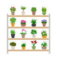 Houseplants On Shelves vector image