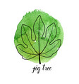 leaf of fig tree vector image vector image
