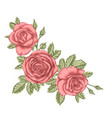 beautiful bouquet with three red roses and leaves vector image vector image