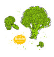 broccoli hand drawn in the vector image