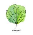 leaf sassafras tree vector image vector image