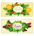 Natural fruits and berries banners vector image vector image
