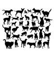 pet animal vector image vector image