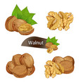 walnut kernel in nutshell with leaves set vector image vector image