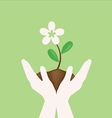 White flower on hand holding vector image vector image