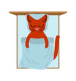 cat sleeps in bed pillow and blanket sleeping vector image vector image