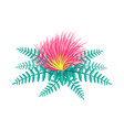 centaurea tropical flower vector image