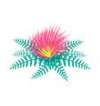 centaurea tropical flower vector image vector image
