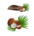 coconut with half and green palm leaves set vector image