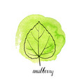 leaf of mulberry tree vector image vector image