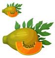 papaya fruit cartoon icon isolated vector image