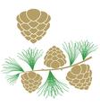 Pine cone Larch tree vector image vector image