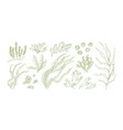 collection monochrome edible algae isolated on vector image