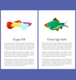 green tiger barb and guppy fish posters vector image vector image