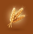 realistic ear of wheat vector image vector image