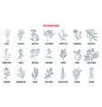 best medicinal expectorant herbs vector image vector image
