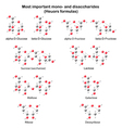 Chemical models of main mono- and disaccharides vector image vector image
