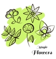 Set Magic Flowers vector image vector image