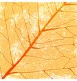 Autumn Leaf Vintage Background vector image vector image