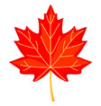 colorful cartoon red maple leaf vector image