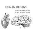 human biology organs anatomy vector image vector image